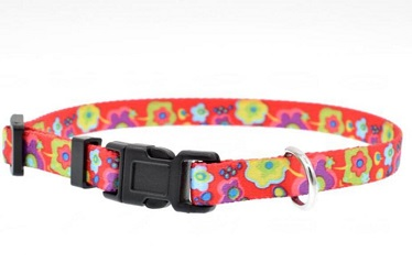 Beautiful quality collar leash and harness for small medium dog