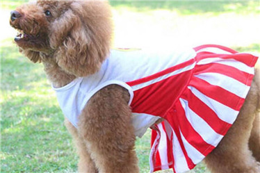 Quality pet shirt for summer/pet skirt clothes
